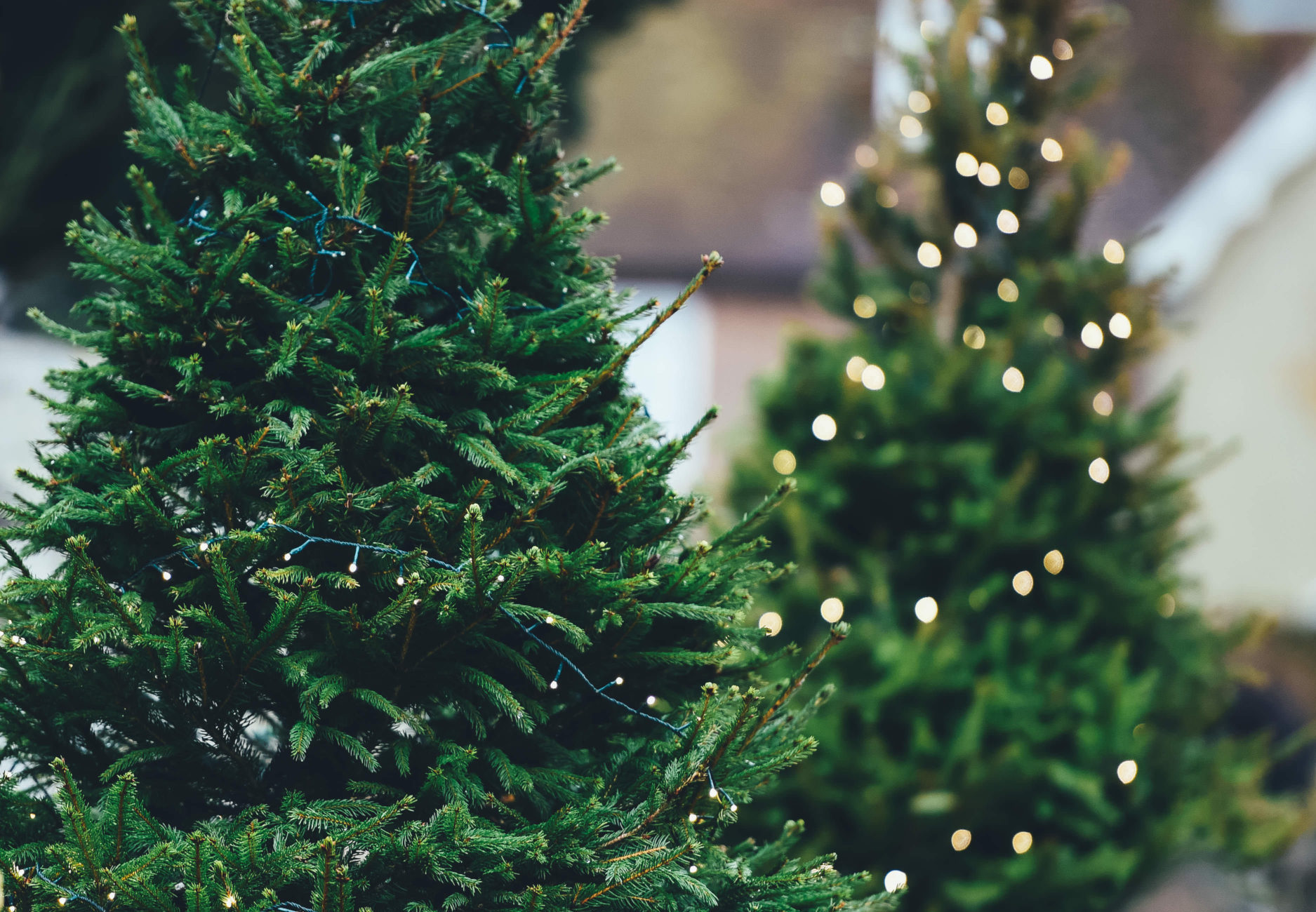 Keep the Season Alive – SuperAvit Landscaping Services