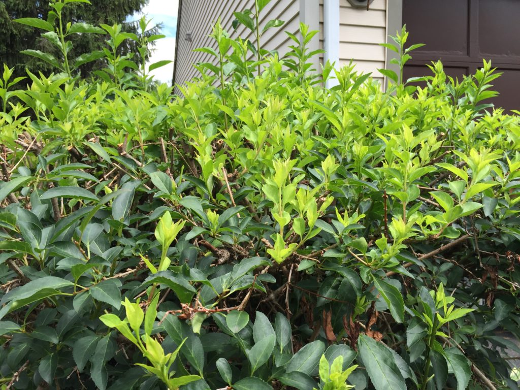 How To Prune Now For Healthy Trees And Shrubs Superavit